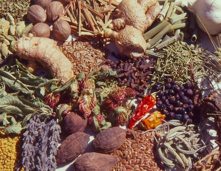 group of about 20 dried herbs and spices