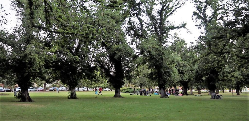 part of circle of elms