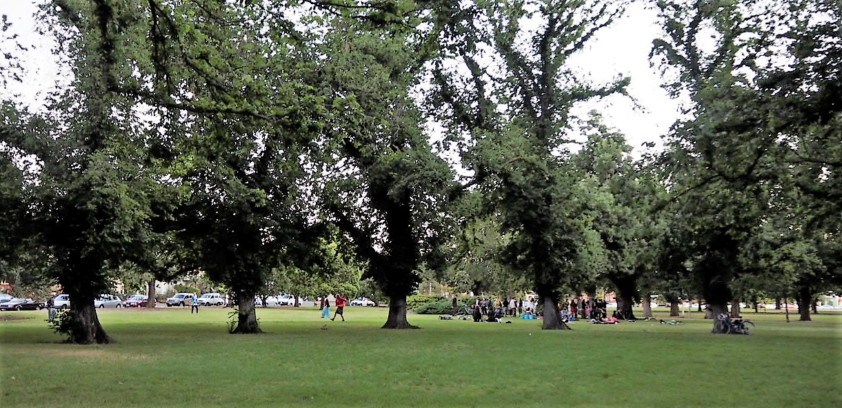 The Circle Of Elms In Edinburgh Gardens Sue Evans